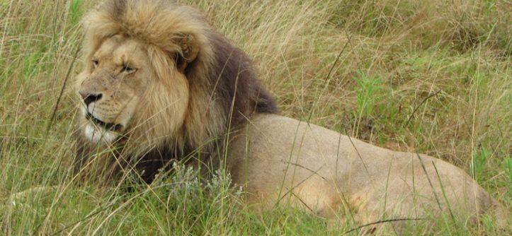 Interação com filhotes de animais na África do Sul: É hora de parar?