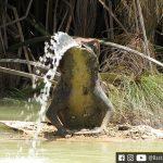 Vinícola Anura - Stellenbosch, África do Sul