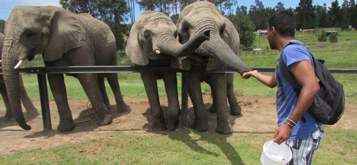 Dicas da Garden Route: Knysna Elephant Park
