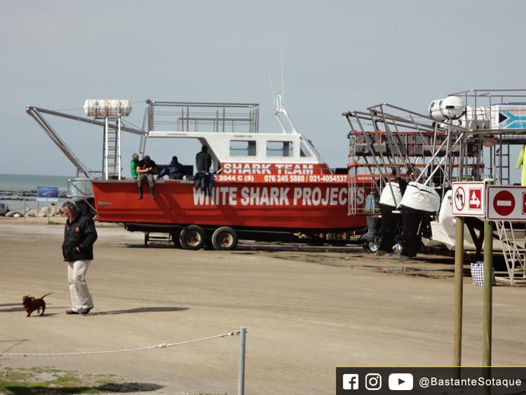 Shark Diving - Gansbaai, África do Sul