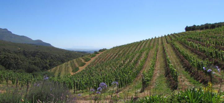 Vinícolas da África do Sul: Tokara, Stellenbosch