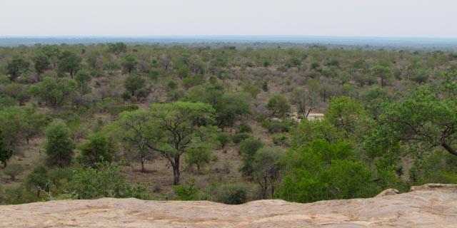 Paisagem Safári Kruger