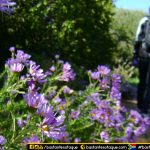 Jardim de Kirstenbosch, Cape Town