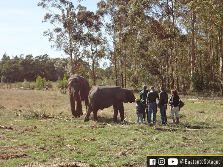 Knysna Elephant Park, África do Sul